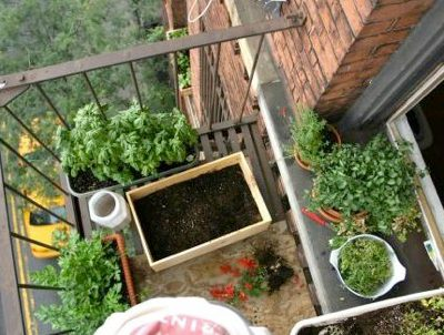 Growing food at home in small spaces green home guide - Growing in small spaces image ...