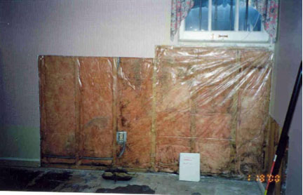Why Are Basements Moldy Green Home Guide Ecohome