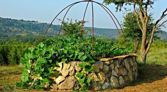 Growing food at home in small spaces green home guide for Green home guide