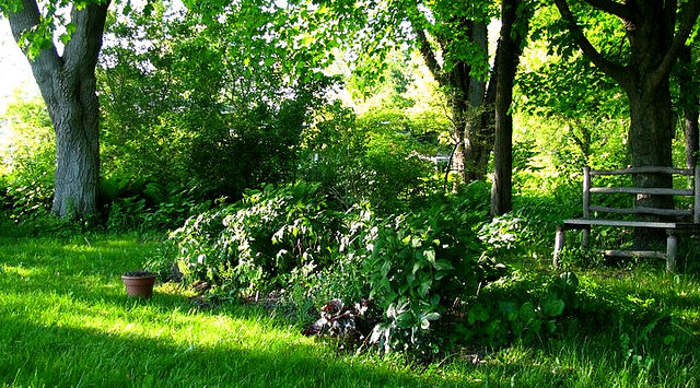 Vegetables That Grow Well In The Shade Green Home Guide