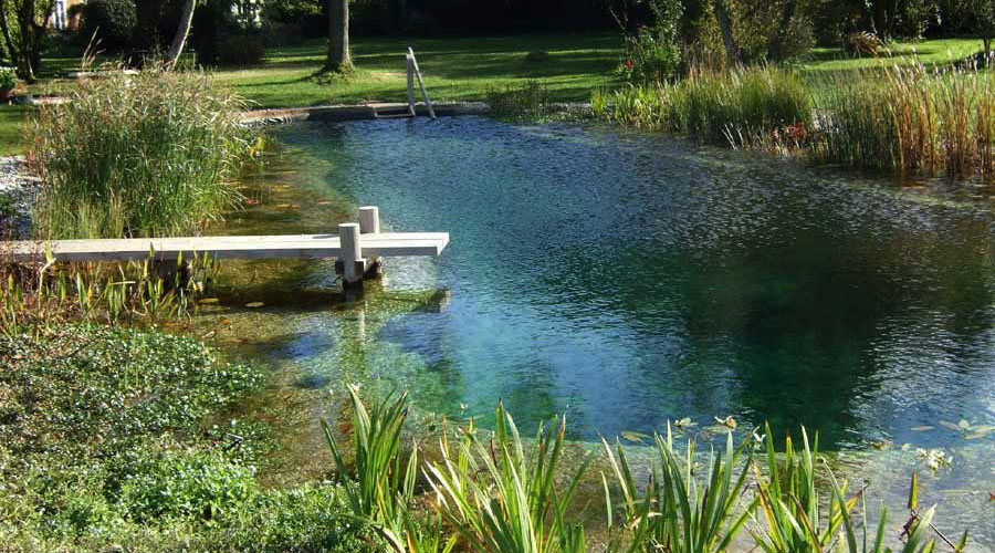 All about natural swimming pools green home guide ecohome Natural swimming pool builders