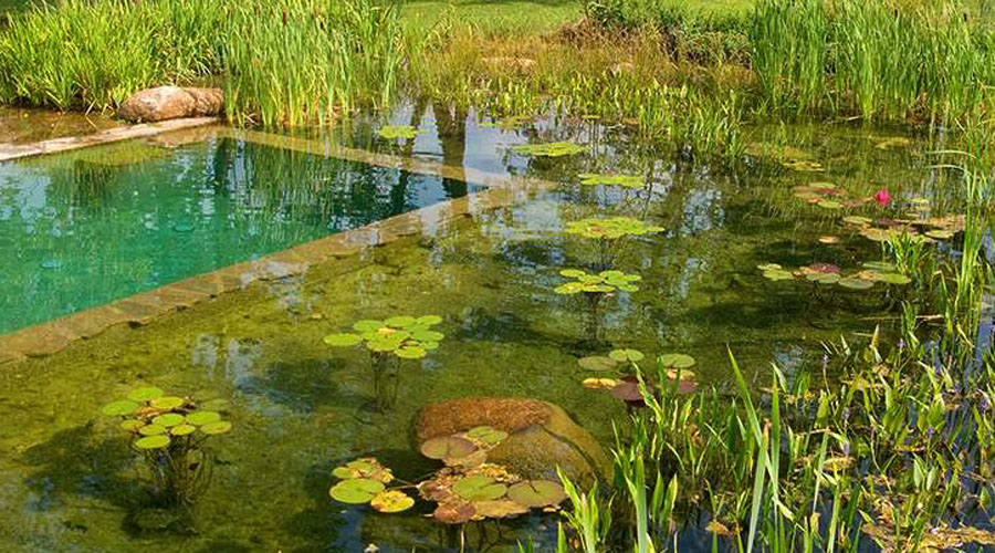 All about natural swimming pools green home guide ecohome - The pond house nature above all ...