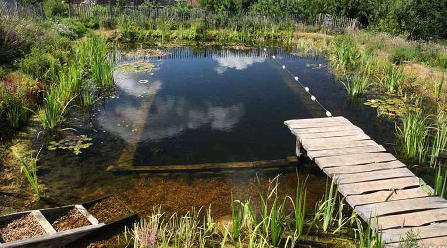 All about natural swimming pools green home guide ecohome solutioingenieria Images