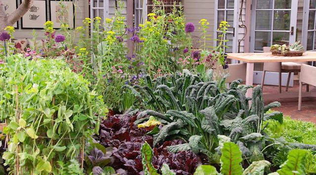 The edible landscape can be an abundant provider