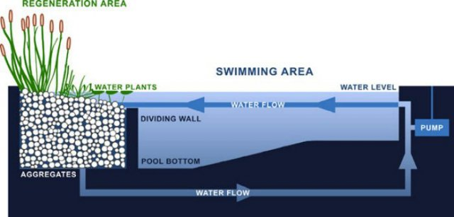 All about natural swimming pools ecohome for Pond filter setup diagram