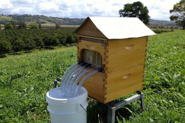 Commercial version Flow™ frame bee hive