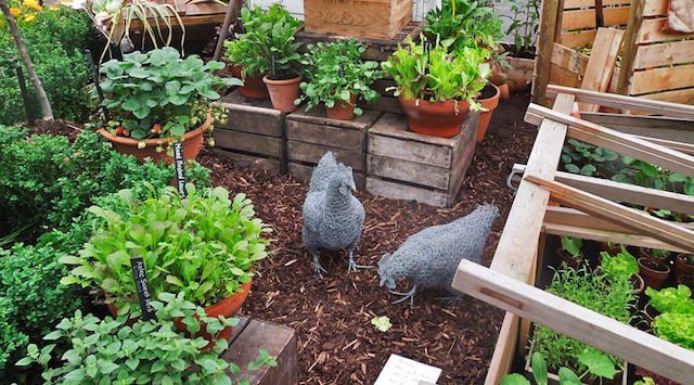 Grow food at home: 7 tips for growing food in small spaces