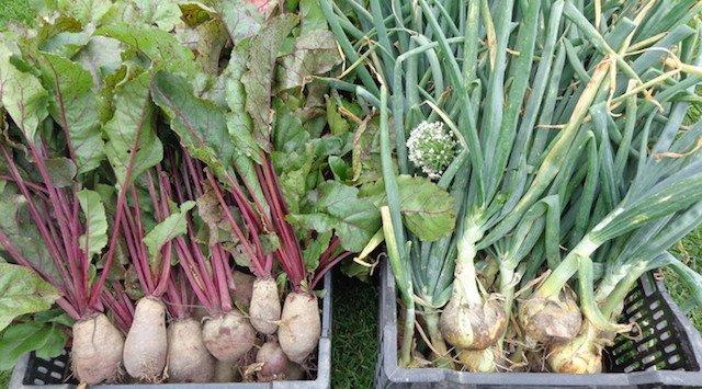Kinburn Farms Workshop: Sowing your Seeds!