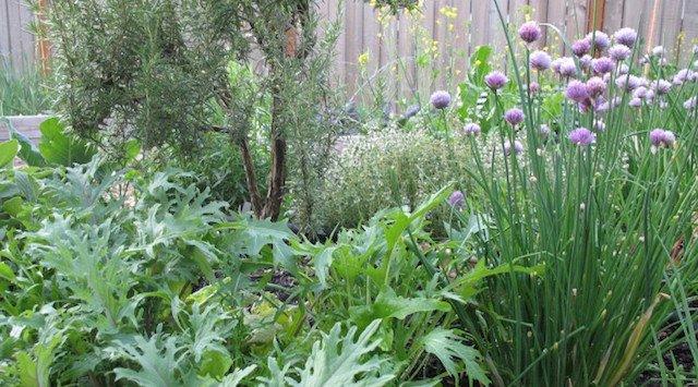 Edible Perennials