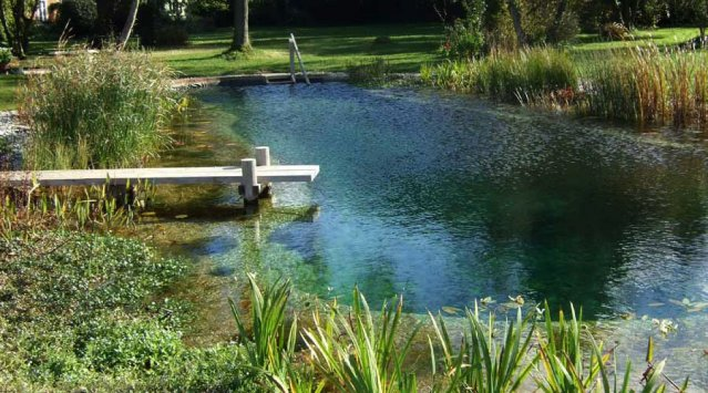 Building Natural Ponds : All about natural swimming pools green home guide ecohome