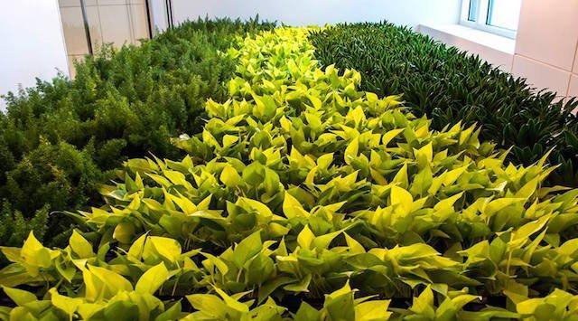 Dirrtt Environmental Solutions, Green Wall