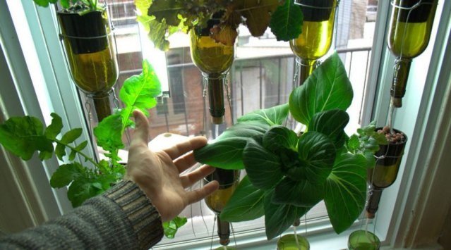 Vertical hydroponic window garden from biocity news for Indoor vegetable gardening tips