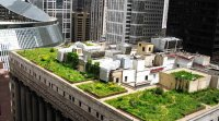 Chicago green roof