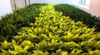 Dirrtt Environmental Solutions, Green Wall