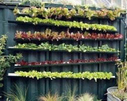 Repurposed eavestrough in a vertical garden