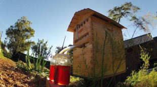 Flow Frames: A father and son revolutionize beekeeping and put honey on tap.