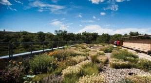 Living green roof on the Helen Schuler Nature centre