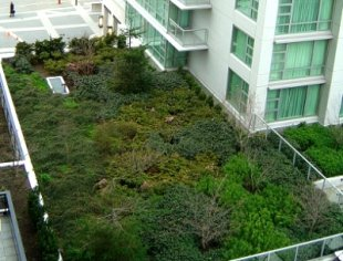 Green roof on the Marriot Hotel in Victoria, BC