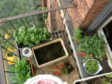 7 tips for growing food in small places cultivate for Limited space gardening ideas