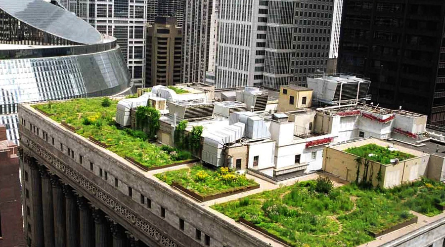 Green Roofs In Downtown Toronto News Ecohome