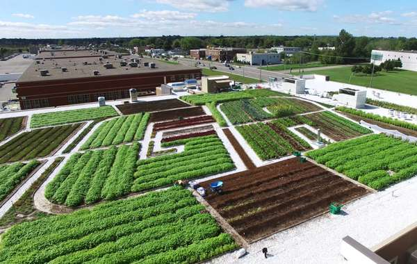 Green Roof on Canadian Grocery Store