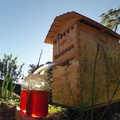 Flow Frames: A father and son revolutionize beekeeping and put honey o