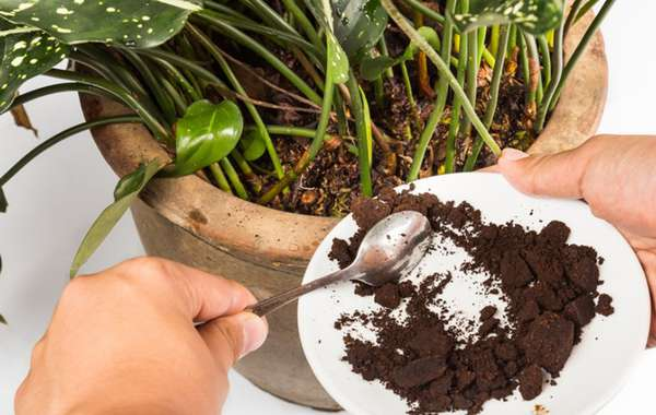 Why you should Never put Coffee Grounds In the Garden