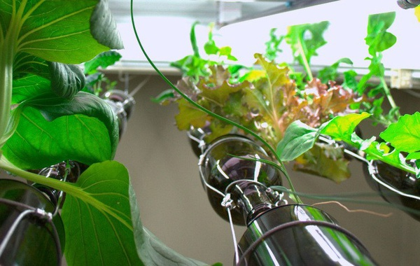 Indoor hydroponic vegetable garden