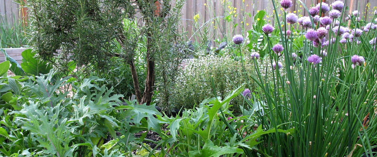 A Guide To Growing And Harvesting Edible Perennials Ecohome