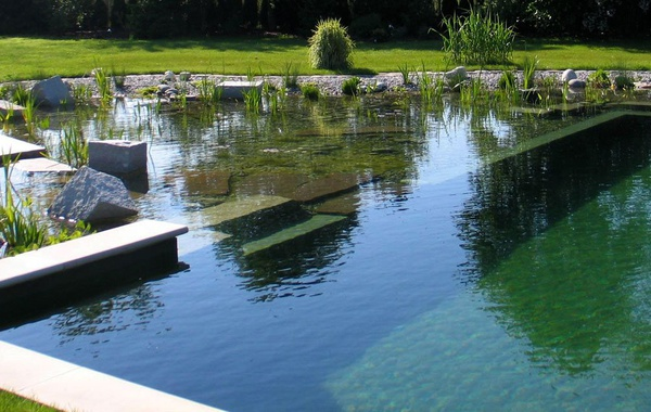 Natural backyard swimming pool design (NSP)