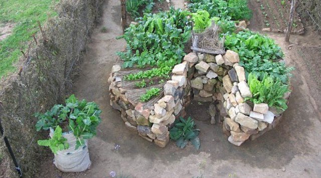Keyhole Gardens Growing Drought, Keyhole Garden Design