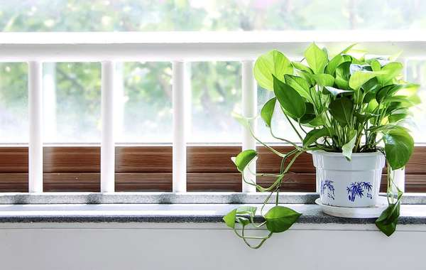 Which Houseplants are Best to Clean Air & Remove Toxins?
