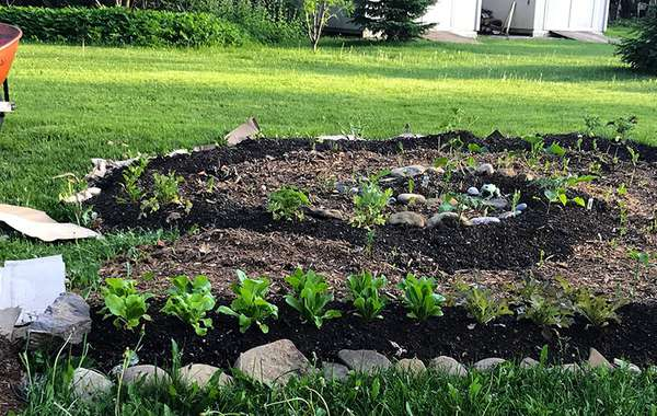 Lasagna Gardening - How to Build an Easy Vegetable Garden