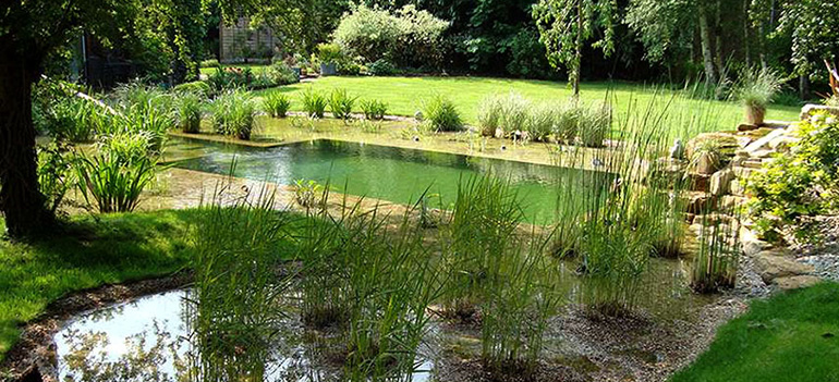 All About Natural Swimming Pools Ecohome