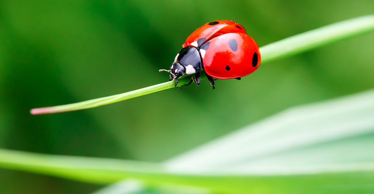 Keeping a healthy lawn attracts insects and helps biodiversity