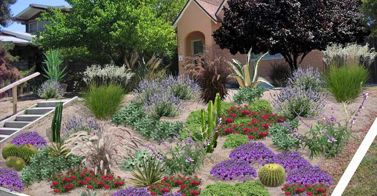 Native perennial beds can replace a lawn providing local insect habitat