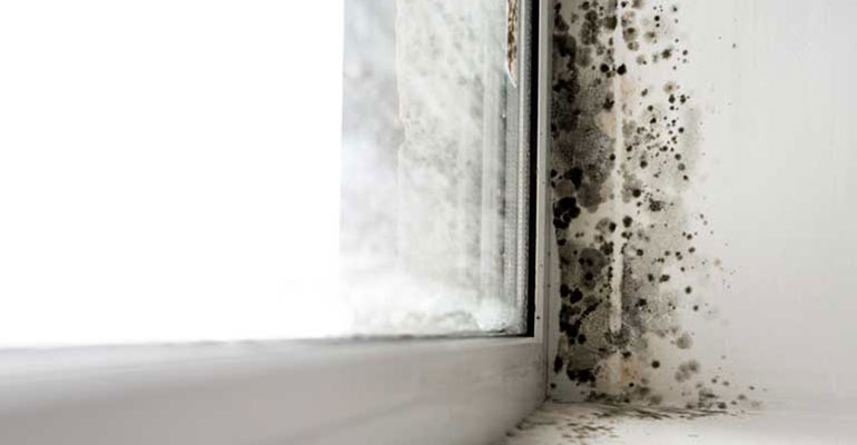 Condensation causes mold and mildew around windows