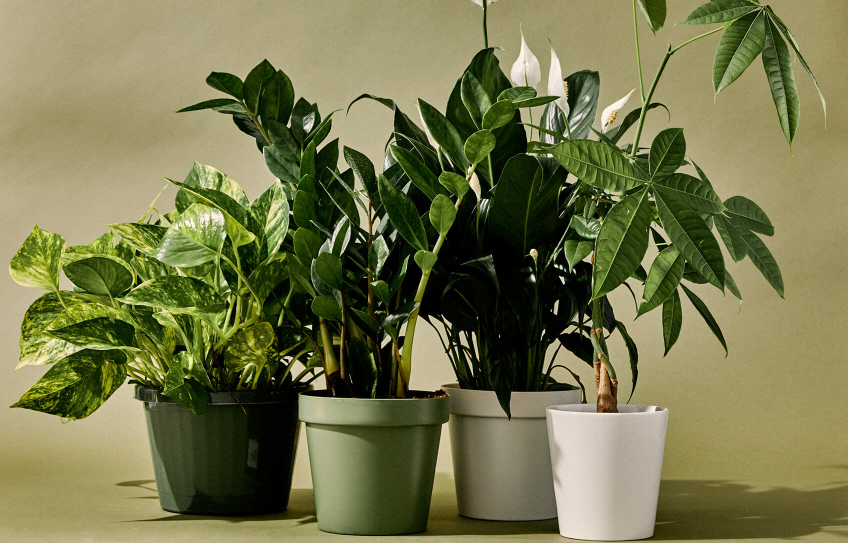 J:\Images\Which_Houseplants_are_Best_for_Improving_Indoor_Air_Quality_None_thats_which.png