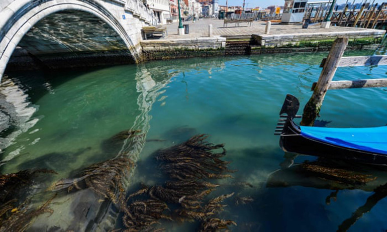 Global shutdown leads to clean water in Venice allows nature to rebound