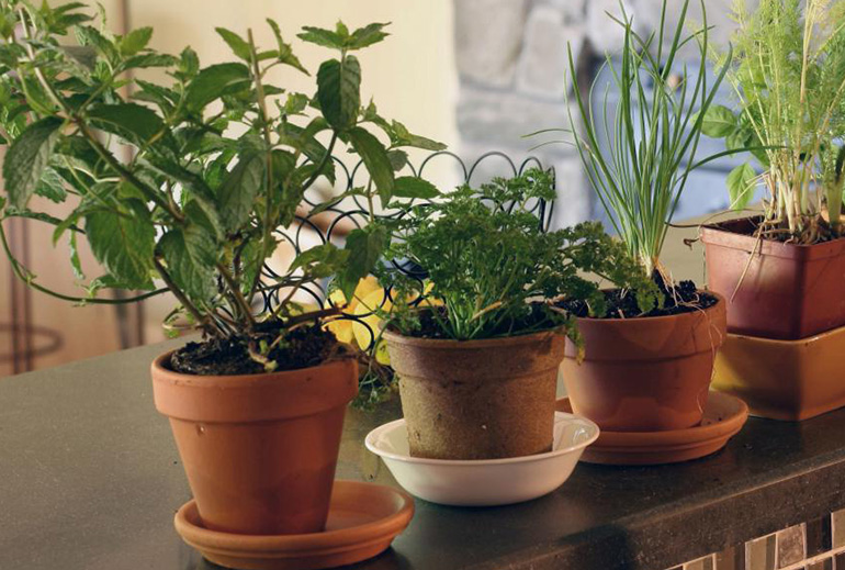 growing herbs and spices indoors