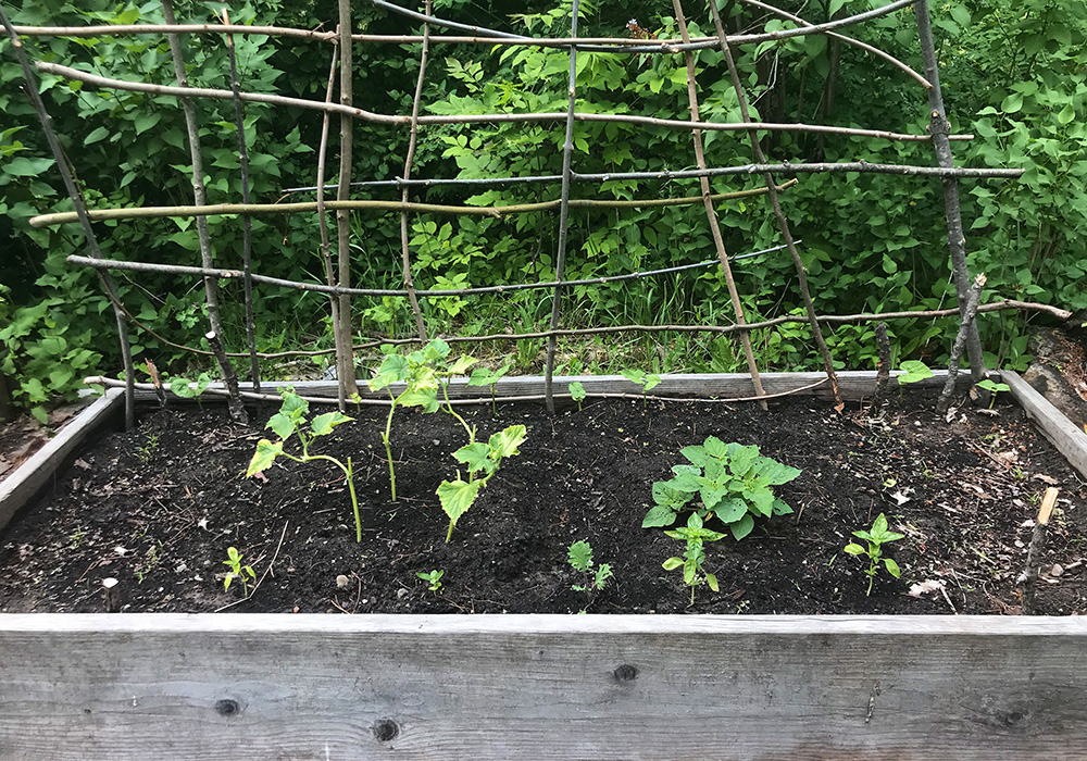 A lasagna garden with raised bed borders can help prevent pests